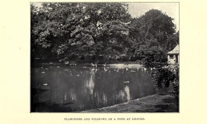 Flamingo Pond at Lilford